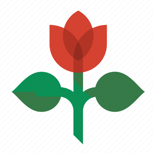 flower, plant, rose, tulip icon