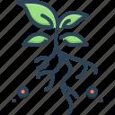 environment, flora, grassroots, leaf, natural, plant, underground