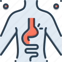 body, digestive, diverticulitis, hernia, inguinal, stomach