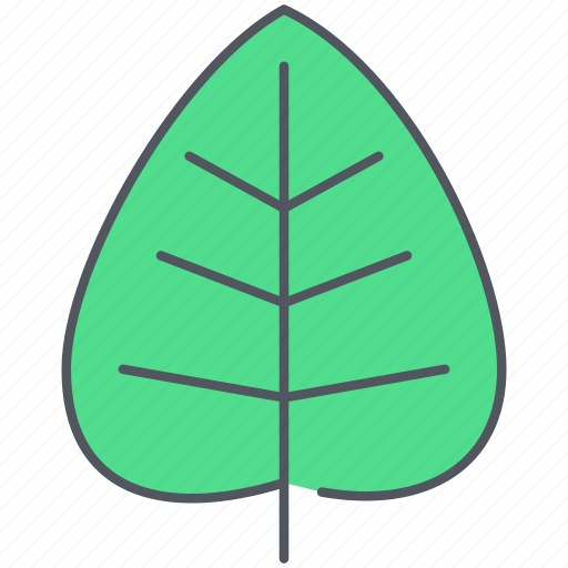 cottonwood, ecology, foliage, forest, greenery, leaf, nature icon
