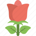blossom, flower, gardening, red rose, rose