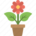 flower, gardening, plant, plantation, pot