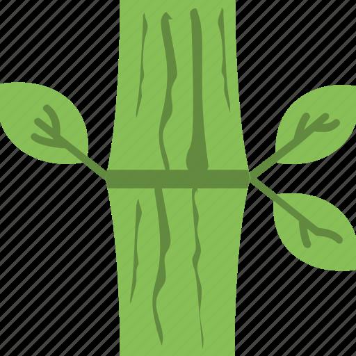 bamboo, bamboo stick, leaf, nature, plant icon