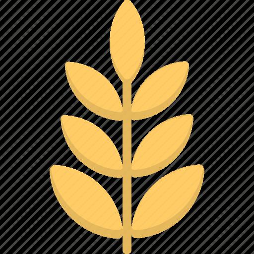 gluten, grain, rye, wheat, wheat ear icon