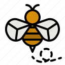 bee, zoology, honey, entomology, wasp