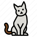 cat, pet, animal, kitty, feline