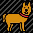 dog, pet, mammal, animal, friend