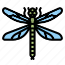 dragonfly, animal, infestation, plague, insect