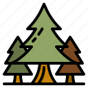 pine, forest, pines, trees, nature