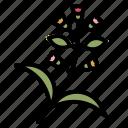 plant, plants, enviroment, growing, farming
