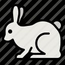 rabbit, bunny, animal, animals, zoology