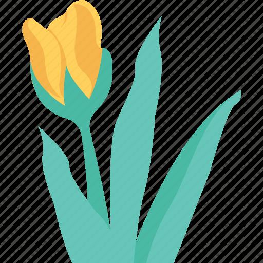 flower sapling, foliage, leaves, plant, seedling icon