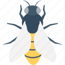 apis mellifera, bees, farming, fly, insect icon