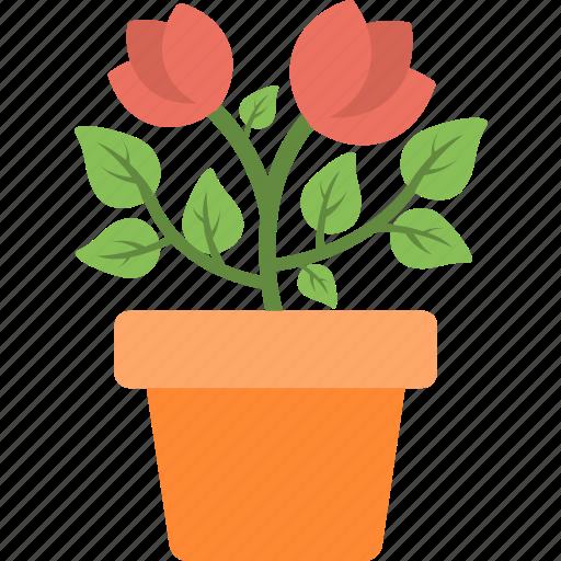 flower, gardening, plant, plantation, pot icon