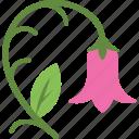 blossom, floral, flower, nature, tulip