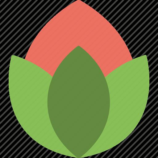 beauty, bud, flower, lily, lotus bud icon