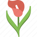amaryllis, beauty, floral, flower, nature icon
