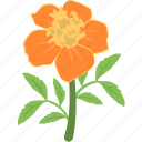 blooming, daisy, flower, gerbera, nature icon