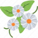 blooming, blossom, daisy, flower, nature icon