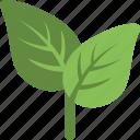 ecology, foliage, greenery, leaf, nature