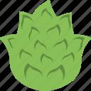 artichoke, diet, food, nutrition, vegetable