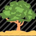 ash tree, evergreen, foliage, greenery, nature