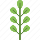 generic, wood, forest, foliage, deciduous tree