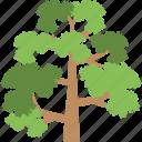 gardening, greenery, nature, shrub tree, tree
