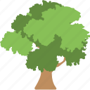 gardening, greenery, nature, shrub tree, tree icon