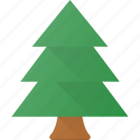 forest, nature, park, pine, tree icon