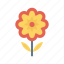 bloom, camomile, flower, garden, nature icon
