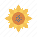bloom, garden, nature, park, sunflower icon