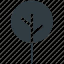 cypress tree, evergreen tree, tree icon
