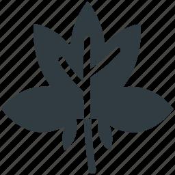 autumn, foliage, leaf, maple leaf, winter leaf icon
