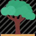 oak, shrub, tree, ash icon