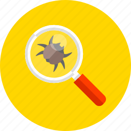 bug, magnifier, protection, search, security, web, zoom icon