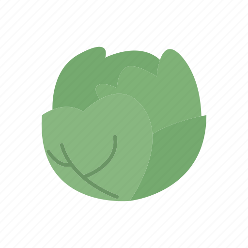 cabbage, food, green, healthy, organic, vegetable icon