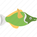 bluegill, bluegill sunfish, fish, freshwater fish, walleye fish icon