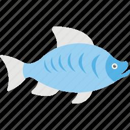 bigmouth buffalo, buffalo fish, fish, sea life, seafood icon