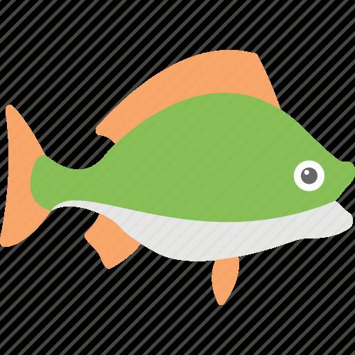 bluegill, bluegill sunfish, fish, freshwater fish, walleye fish icon