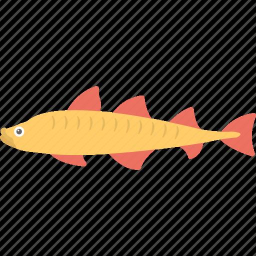 fish, freshwater fish, jackfish, northern pike, pike icon