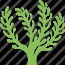 algae, algae bloom, cladophora, seaweed, underwater alga