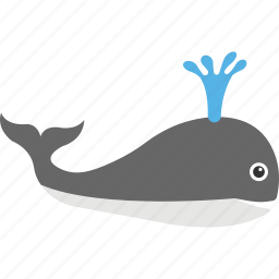 beluga whale, dolphin, killer whale, orca, whale icon