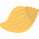 gastropod shell, mollusc, sea mollusk shell, seashell icon