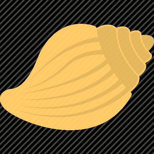 gastropod shell, mollusc, sea mollusk shell, seashell icon