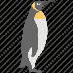 animal, aquatic bird, penguin, sea life, seabird icon