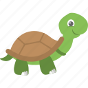 sea animal, sea life, sea turtle, tortoise, turtle