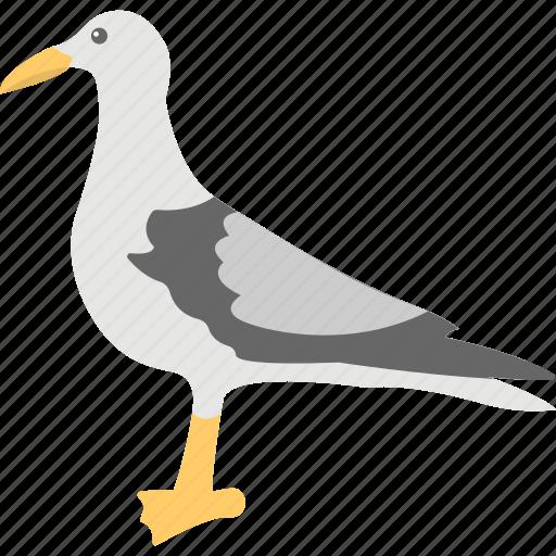 bird, cartoon, dove, peace bird, pigeon icon