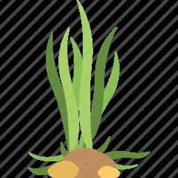 algae, algae bloom, cladophora, seaweed, underwater alga icon