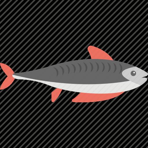 animal, fish, shark, whale, wildlife icon